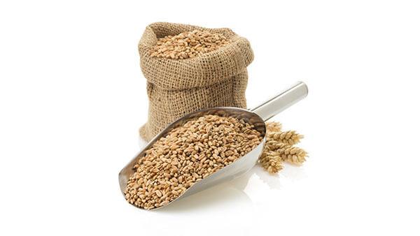 Getreidefutter