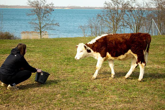 Ökologische Rinderhaltung Landhandel Ackermann
