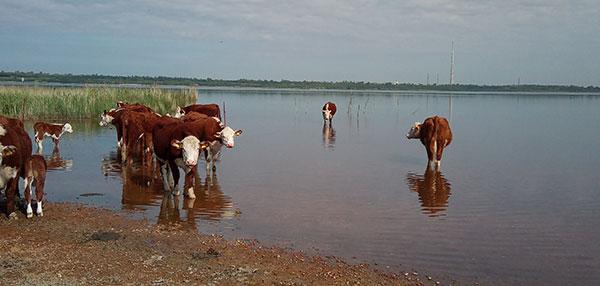 Ökologische Rinderzucht - Landhandel Ackermann